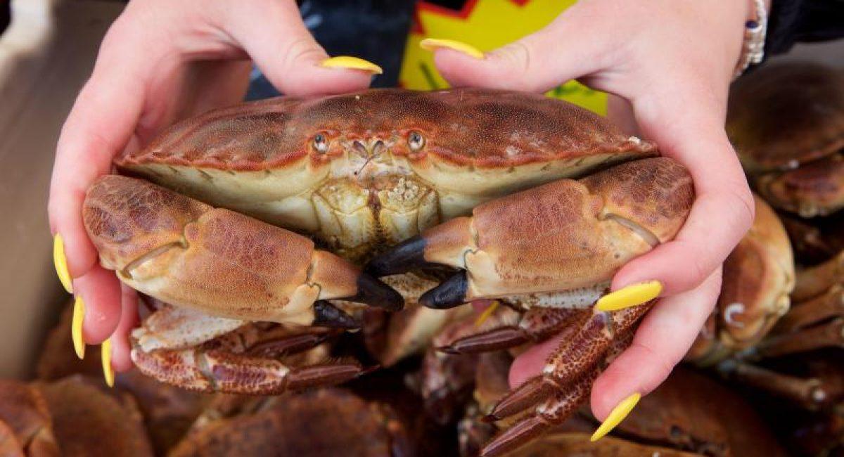 crabe 6
